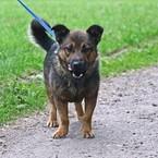 Dovanoju: šuo (mišrūnas, patinėlis) Kaunas