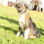 Dovanoju: šuo (mišrūnas, patelė) Marijampolė