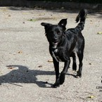 Dovanoju: šuo Liza (mišrūnas, patelė) Klaipėda