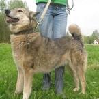 Dovanoju: šuo (mišrūnas, patelė) Kaunas