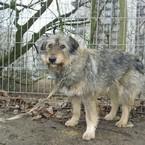 Radau, dovanoju: šuo (mišrūnas, patelė) Vilnius