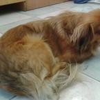 Radau, dovanoju: šuo Pupa (mišrūnas, patelė) Utenos raj.