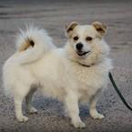 Radau, dovanoju: šuo Čiobrelis (mišrūnas, patinėlis) Vilnius