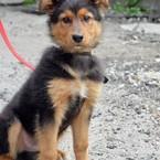 Dovanoju: šuo (mišrūnas, patinėlis) Vilnius