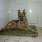 Radau, dovanoju: šuo (mišrūnas, patinėlis) Vilnius