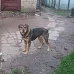 Dovanoju: šuo Bela (mišrūnas, patelė) Marijampolė